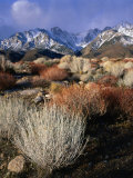 Mountains and Desert Flora in the Owens Valley  Inyo National Forest  California  USA