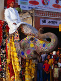 Man Riding Decorated Elephant in Street Parade of Annual Elephant Festival  Jaipur  India