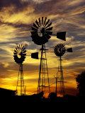 Windmills at Sunset in Penong  Australia