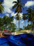 Wooden Fishing Boats Among Palm Trees  Pigeon Point  Trinidad & Tobago