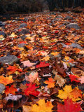 Fall Leaves Create a Patchwork of Colours  Great Smoky Mountains National Park  Tennessee  USA