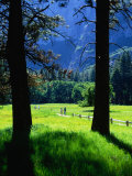 Couples Walk on Paths Through the Spring Fields  Yosemite Valley  California  USA