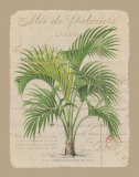 Alee de Palmiers