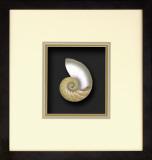 *Exclusive* Natural Nautilus II