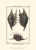 Sea Shells VIII