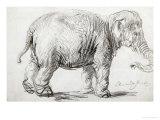 Elephant  1637  Black Chalk Drawing