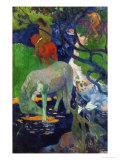 White Horse  1898