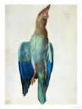 Roller (Bird)  1512