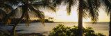 Palm Trees on the Coast, Kohala Coast, Big Island, Hawaii, USA Papier Photo