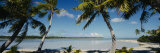 Palm Trees on the Beach  Mataiva  Tuamoto Islands  French Polynesia