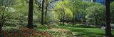 Trees in a Park  Central Park  Manhattan  New York  USA