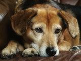 Mixed Breed Dog Sitting on Sofa