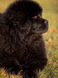 Profile Portrait of Young Black Newfoundland