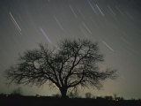 Star Trails  20 Minutes Exposure Time  Pusztaszer  Hungary