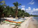 Beach with Palm Trees and Kayaks  Punta Soliman  Mayan Riviera  Yucatan Peninsula  Mexico