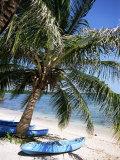 Beach with Palm Tree and Kayak  Punta Soliman  Mayan Riviera  Yucatan Peninsula  Mexico