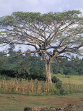 Oromo Country, Bako Region, Shoa State, Ethiopia, Africa Papier Photo par Bruno Barbier