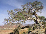 On the Flank of Mount Workamba  Tambien Region  Tigre Province  Ethiopia  Africa