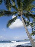 Beach at Kailua-Kona  Island of Hawaii (Big Island)  Hawaii  USA