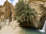 Desert Oasis  Chebika  Tunisia  North Africa  Africa