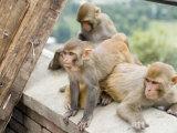 Swayambhunath (Monkey Temple)  Kathmandu  Nepal