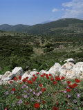Flowers and Landscape  Greece