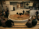 Skibbereen Cattle Auctions  County Cork  Munster  Eire (Republic of Ireland)