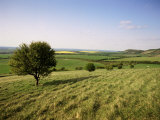 Ivinghoe Beacon from the Ridgeway Path  Chiltern Hills  Buckinghamshire  England