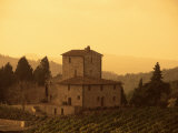 Farms and Vines  Tuscany  Italy