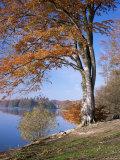 Lake  Virginia Water  Windsor Great Park  Berkshire  England  United Kingdom