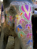 Decorated Elephant at the Amber Fort  Jaipur  Rajasthan State  India