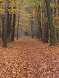 Forest Way  Paderborn  Germany