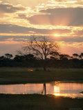 Sunset and Waterhole  Hwange National Park  Zimbabwe  Africa