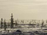 Snow Storm  Blizzard  Churchill  Hudson Bay  Manitoba  Canada