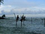 Stilt Fishermen Fishing from Their Poles Between Unawatuna and Weligama  Sri Lanka