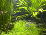Fish Aquarium at Wilhelma Zoo and Botanical Gardens  Stuttgart  Baden Wurttemberg  Germany