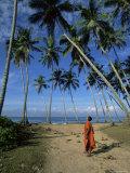 Buddhist Monk Looking up at Palm Trees Between Unawatuna and Weligama  Sri Lanka