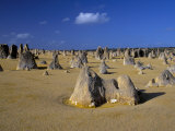 Limestone Pillars in the Pinnacles Desert  Nambung National Park  Western Australia  Australia