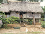 Thatched Homes Along the River  Javari River  Amazon Basin Rainforest  Peru  South America