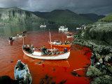 Whaling  Faroe Islands (Faeroes)  North Atlantic
