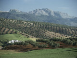 Landscape Near Malaga  Andalucia  Spain