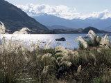 Lake Wanaka  Otago  South Island  New Zealand