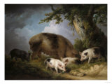 A Sow and Her Four Piglets in a Wooded Landscape