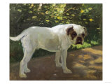 A Bulldog on a Garden Path