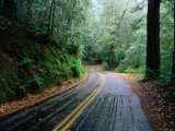 Rain and Wet Roads through the California Forests  California