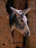 Donkey in Old Town  Siwa  Egypt