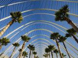 L'Umbracle  The Palm-Lined Promenade at Ciudad de las Artes y las Ciencias  Valencia  Spain