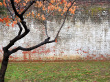 Tree and Wall at Seodaemun Prison  North of River  Seoul  South Korea