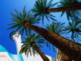 The Stratosphere Hotel and Casino in las Vegas  Las Vegas  Nevada