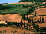 Cypress-Lined Montichiello Road  So of Pienza  Val d'Orcia  Tuscany  Italy